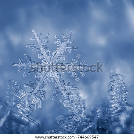 Ice, frost and snowflakes #744669547