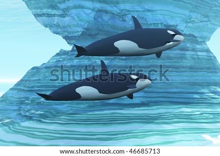 ICE PALACE - Two killer whales swim around submerged icebergs.