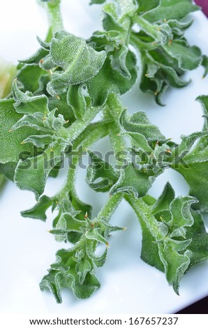 Ice plant on the white plate