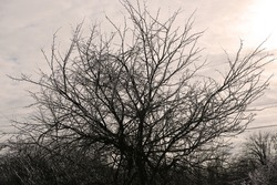 Ice storm on trees in winter