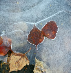 ice texture with frozen soil. Land and foliage under ice.