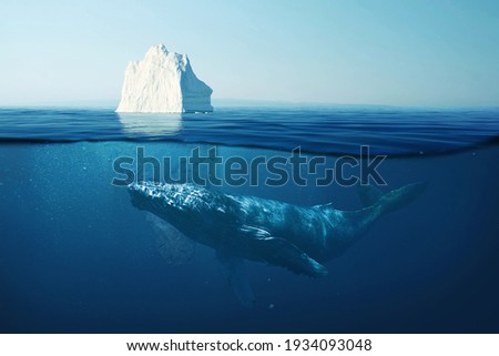 Iceberg in the ocean under water with a whale. Wild life at sea. A beautiful whale swims underwater with an iceberg. Global warming, concept