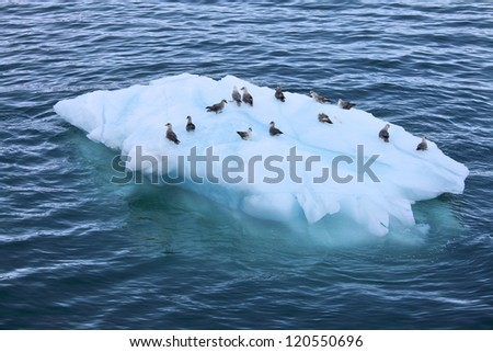 Iceberg with resting seabirds
