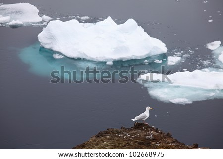 icebergs and seagull on foreground