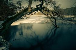 iced lake and tree