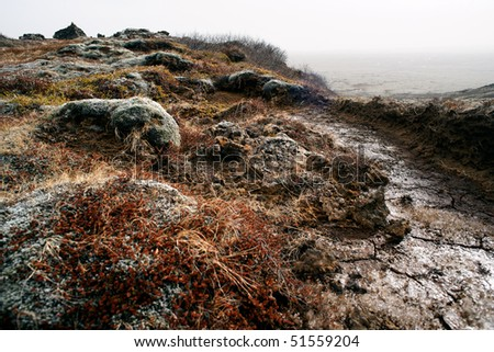 Iceland barren landscape covered with lichens and musk.
