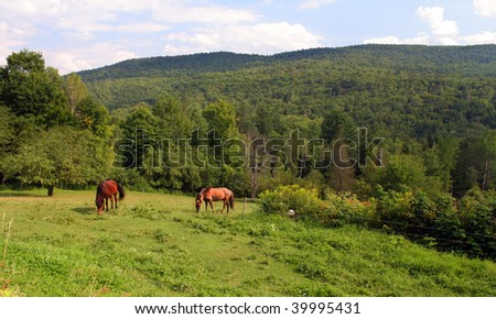 Icelandic horses grazing in the field with the Green Mountains of Vermont in the background.