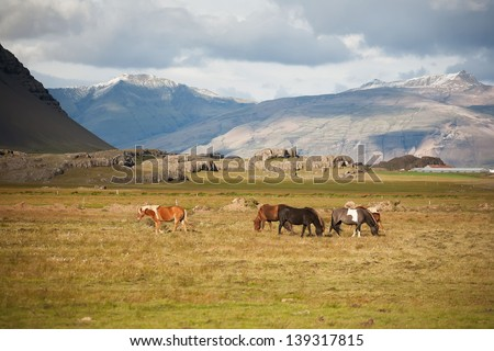 Icelandic horses in a peaceful meadow dominated by a volcanic #139317815