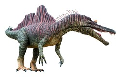 Ichthyovenator is a carnivore genus of Spinosaurid theropod dinosaur that lived during the Early Cretaceous, Ichthyovenator isolated on white background with clipping path