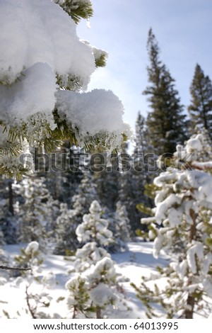 Icicle in Fresh Snow on Mammoth Mountain