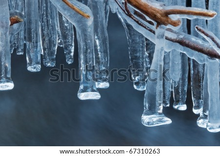 icicles along branches