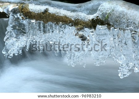 Icicles formed from melting snow hanging from the branches.