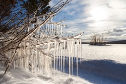 Icicles lit by the sun on the branches of a tree on the shore of a frozen reservoir in the background.Winter landscape.