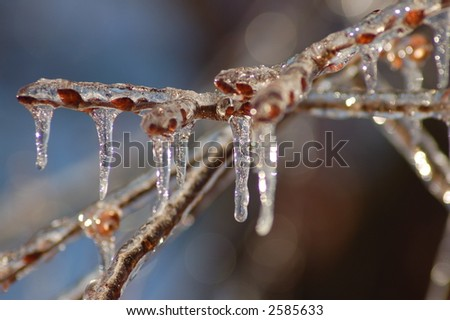 Icicles on Budding Branches