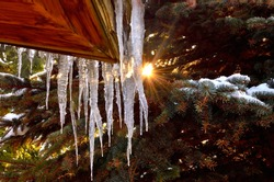 Icicles on cottage with green Pine Tree on the Background.