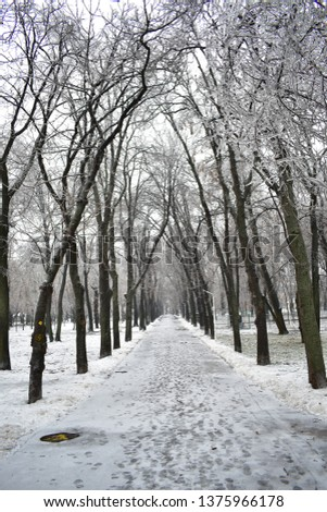 Icy path of a Bucharest park, with trees bending over like a Gothic old ruin. This picture was taken in the aftermath of an ice blizzard in Bucharest.