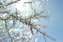 icy tree branches close-up in the sunlight
