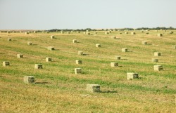 Idaho Falls, Idaho, USA Jul. 1, 2013 Hay bales in an alfalfa field waiting to be picked up..