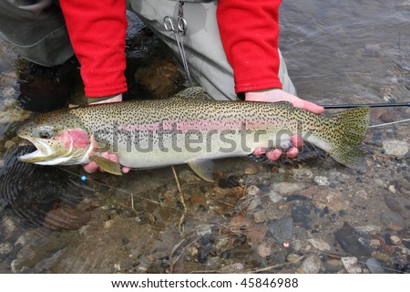 Idaho Steelhead trout