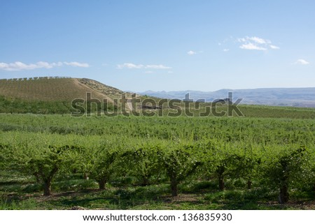 Idaho wine country