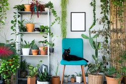 Idea home decoration with beautiful plant