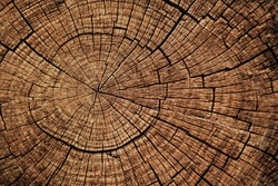 Ideal round cut down tree with annual rings and cracks. Wooden texture.