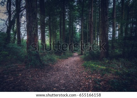 idless woods dark and mysterious near trio in cornwall england uk. #655166158