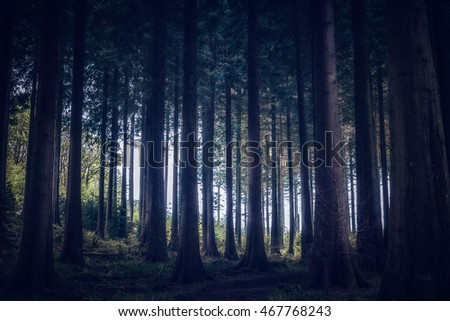 idless woods in cornwall england uk. #467768243