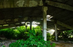 Idustrial interior at the old an abandoned hangar that is overgrown with grass and will soon fall, standing only on a support, through which rays of light make their way. Abandoned rotten and