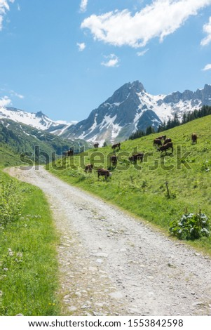 Idyllic alpine landscape with the cow pasture in the French Alps, on the Tour de Mont-Blanc trail in Auvergne-Rhône-Alpes, France #1553842598