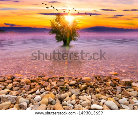 Idyllic and scenery nature.Surreal dream landscape with tree in the water and sunset