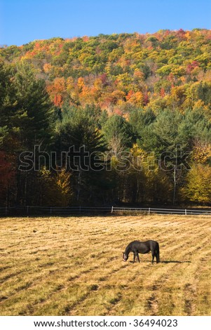 Idyllic autumn landscape with a horse grazing in a spacious pen