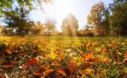 idyllic autumnal landscape in sunshine