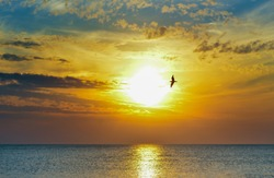 Idyllic evening mood on the beach with a seagull flying through the rays of the setting sun