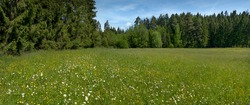 Idyllic flower meadow on a glade at the edge of the forest - panoramic shot