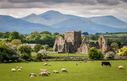 Idyllic Irish Landscape