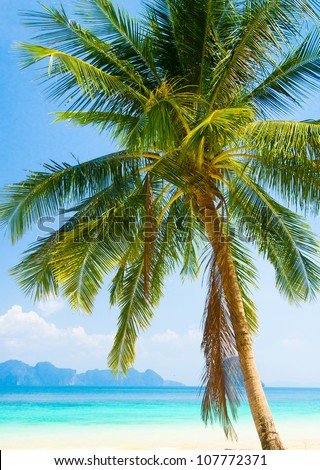 Idyllic Island Palm View