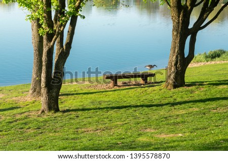 Idyllic lake with recreational facilities and recreational area in the spring with Canada goose on the shore #1395578870