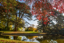 Idyllic  landscape in  Domaine national de Saint-Cloud  - awe  trees and    pond at autumn .  Golden and red Paris!