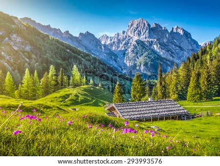 Idyllic landscape in the Alps in springtime with traditional mountain chalet and fresh green mountain pastures with blooming flowers in beautiful evening light at sunset