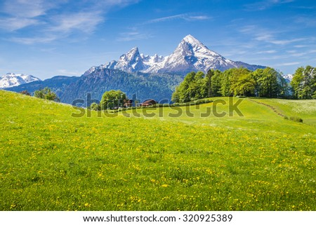 Idyllic landscape in the Alps with fresh green meadows and blooming flowers and snowcapped mountain tops in the background, Nationalpark Berchtesgadener Land, Upper Bavaria, Germany