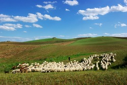 idyllic landscape of Sicily with hills covered of green grass and flock of sheep with shepherd below white clouds