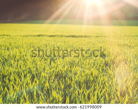 Idyllic location. Tight view of the green grass flooded by the warm sunlight. #621998009