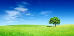 Idyllic panoramic landscape, lonely tree among green fields, in the background blue sky and white clouds