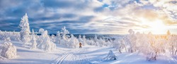 Idyllic panoramic view of young man cross-country skiing on a track in beautiful white winter wonderland scenery in Scandinavia with scenic golden evening light at sunset in winter, northern Europe