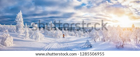 Idyllic panoramic view of young man cross-country skiing on a track in beautiful white winter wonderland scenery in Scandinavia with scenic golden evening light at sunset in winter, northern Europe Foto stock ©
