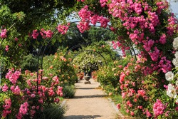Idyllic park with roses on the rose arch, pavilion, paths and fountain