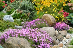 Idyllic rock garden with colourful flowers