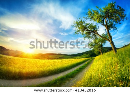 Idyllic rural landscape with meadows. blue sky, a tree and a path leading to the horizon at sunset