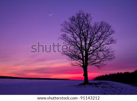 idyllic sunset in field